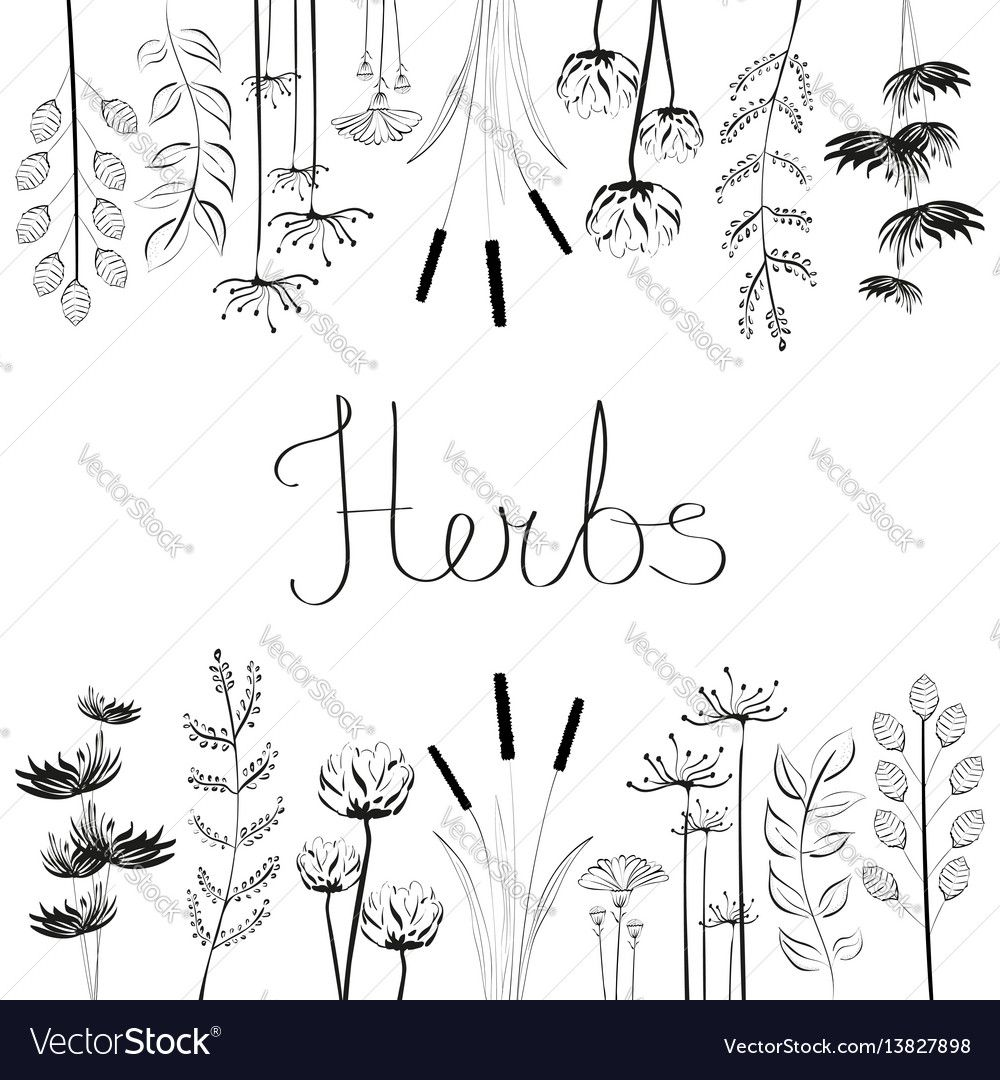 Embroidery pattern from hand drawn herbs and flowers vectorstock embroidery pattern from hand drawn herbs and flowers vectorstock jwt bankloansurffo Choice Image