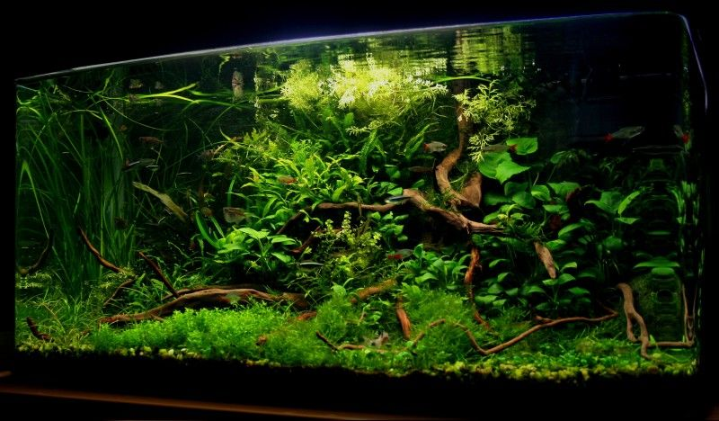 Aquascaping | Aquascaping World Competition   Gallery   Mystical Wilderness  By .
