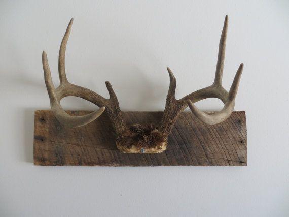 Rustic Vintage White Tail Deer Antler Mount Antler Mount