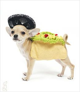 Easy No-Sew Doggy Taco Costume |Taco Dog Halloween Costume Pattern
