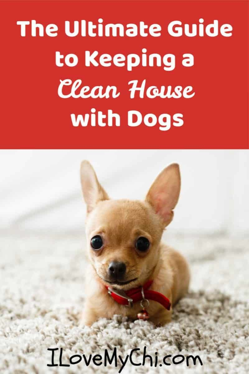 How To Keep Your House Clean When You Have Pets Big Dog Little
