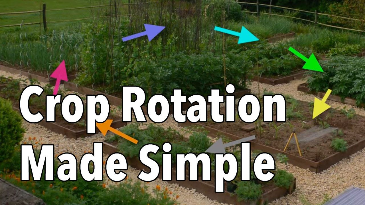 Crop rotation made simple rotate your vegetable beds for for Rotacion cultivos agricultura ecologica