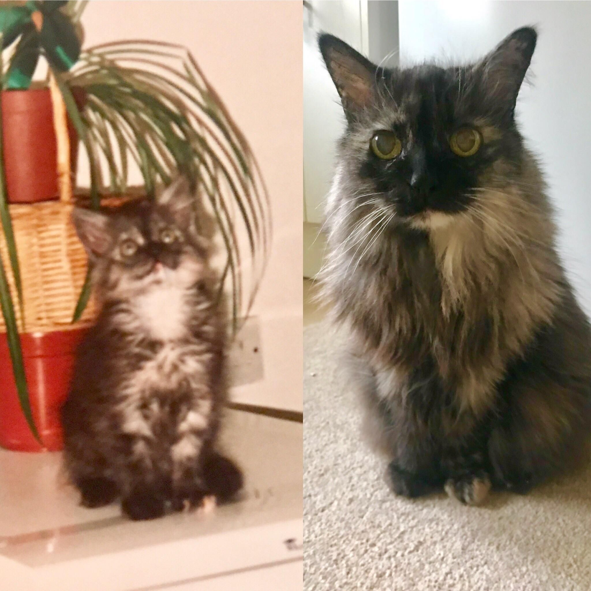 My Cat Is Now 20 Years Old Here Is A Pic Of Her As A Kitten Around A Few Months Old And Now She Has Always Been Tiny For Her Age Http