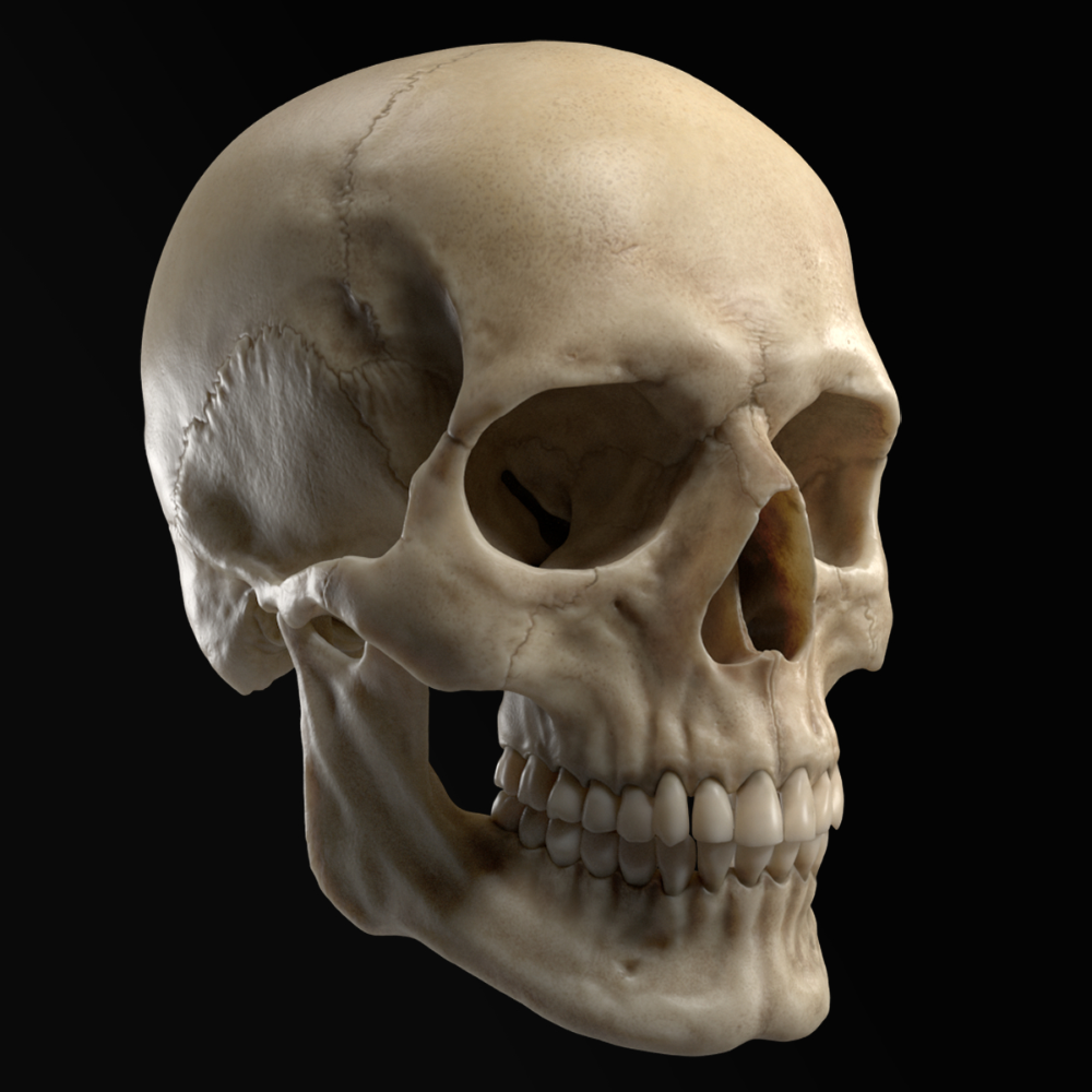 3D sculpted human skull model - TurboSquid 1325988