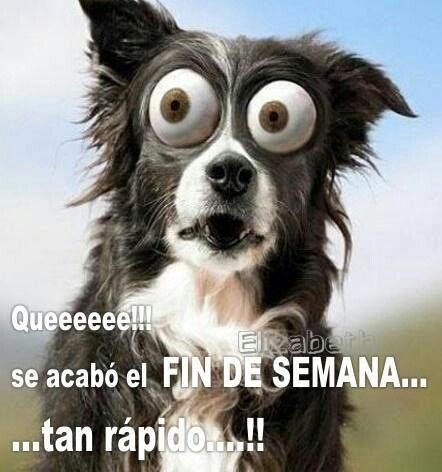 Pin On Spanish Quotes Humor
