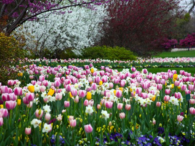 Dallas Arboretum And Botanical Garden Hours | Tour Texas