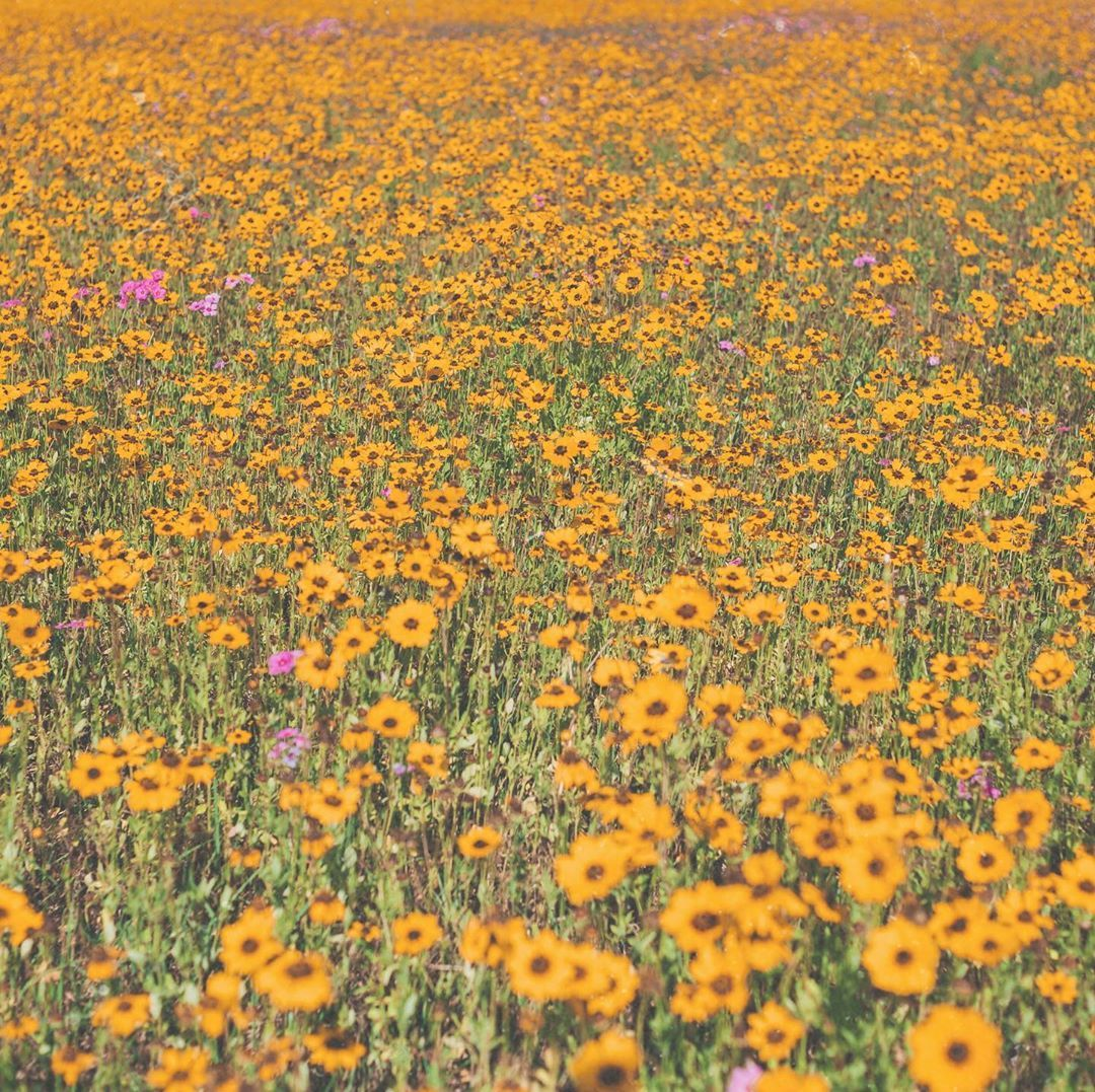 wild flowers in 2020 Wild flowers, Painting, Pumpkin patch