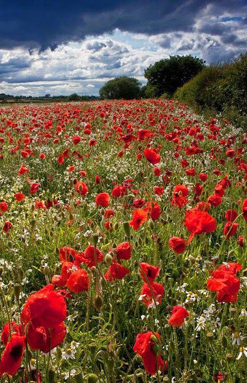 Hampshire Uk Wiki Avec Images Fleurs Sauvages Champ De Fleurs Paysage Fleuri