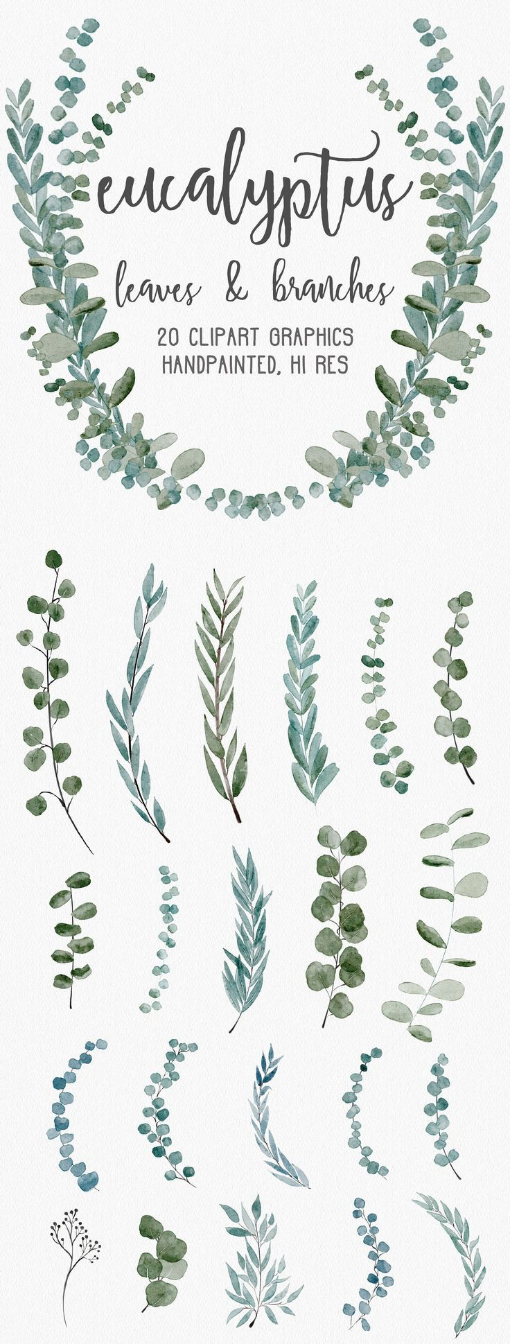 Photo of Eucalyptus Leaf and Twigs Clipart Illustration Hand Painted Watercolor Graphi …