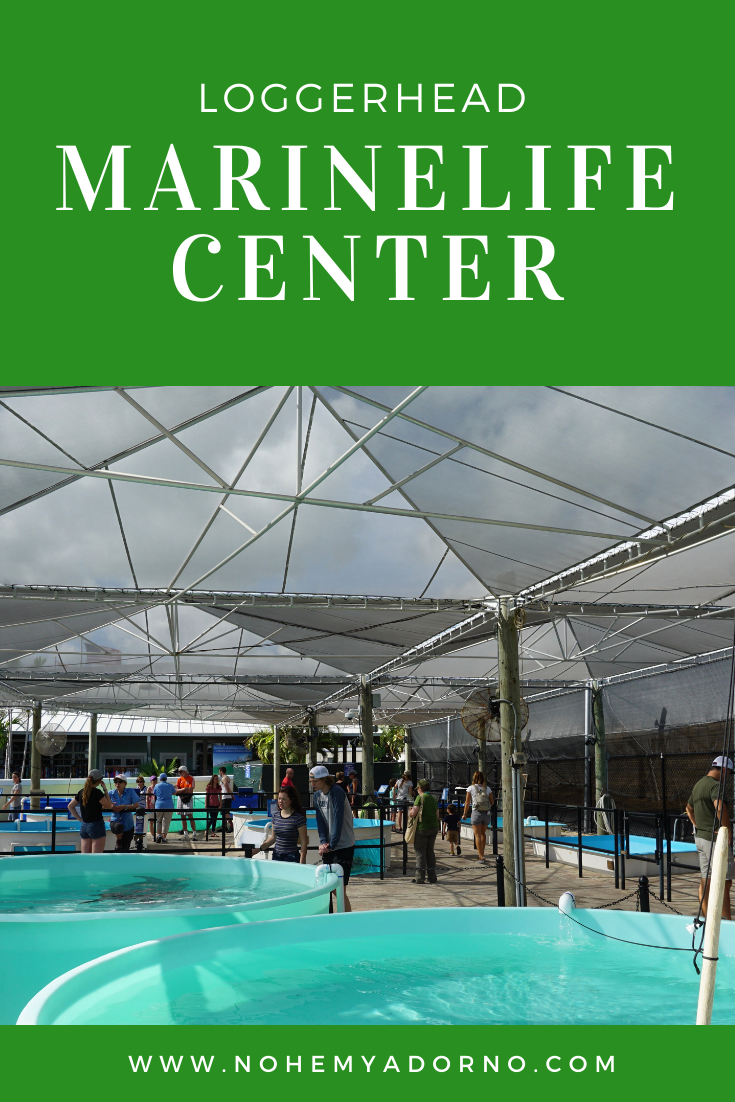 Touring The Loggerhead Marinelife Center - Loggerhead Sea Turtles
