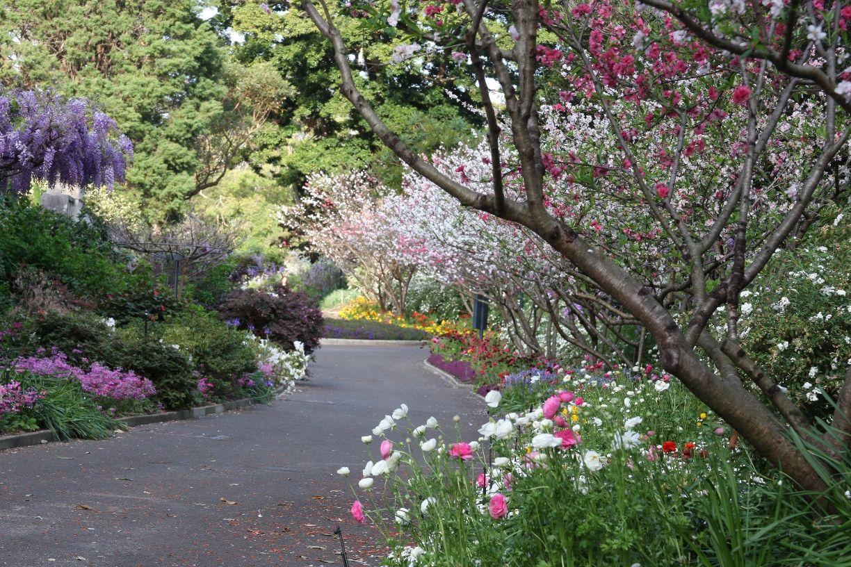 5cc727e6929e3ab49770ffba1dcc2ca5 - What To Do In Royal Botanic Gardens Sydney
