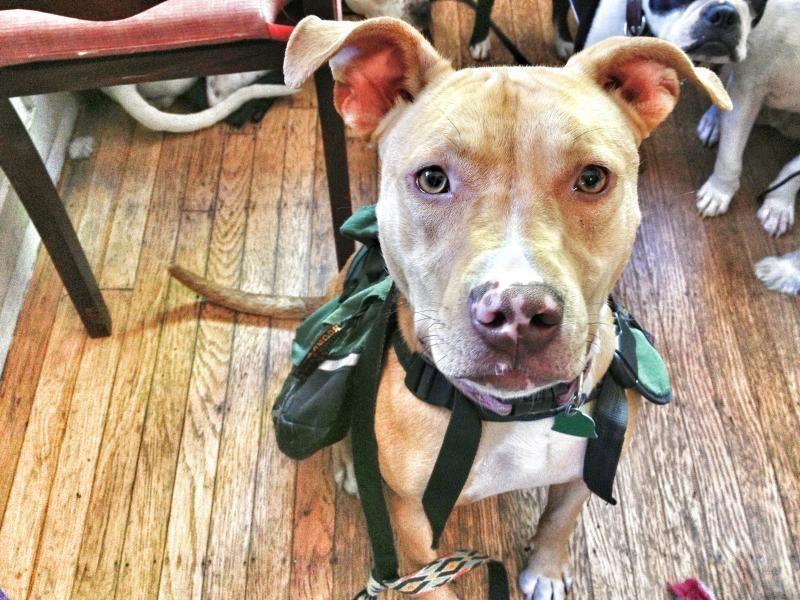 Adopt Roxie ***REDUCED ADOPTION FEE*** on Pet adoption