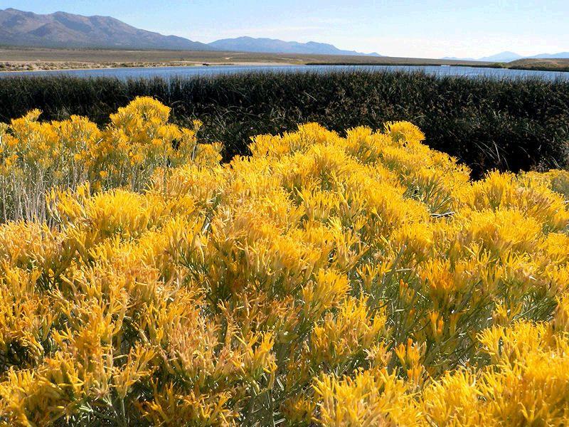 Nevada Natural landmarks, Farmland, Nevada