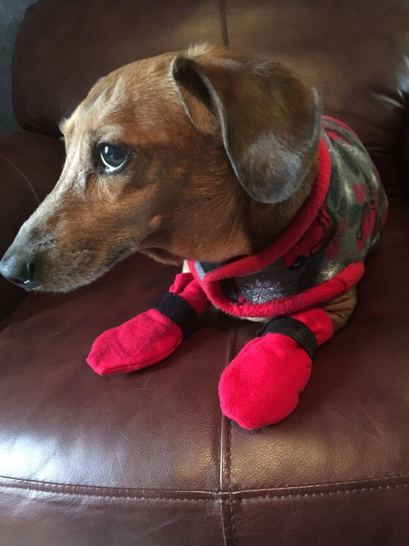 Miniature Dachshund Small Dog Boots Pet Supplies Pet Accessories