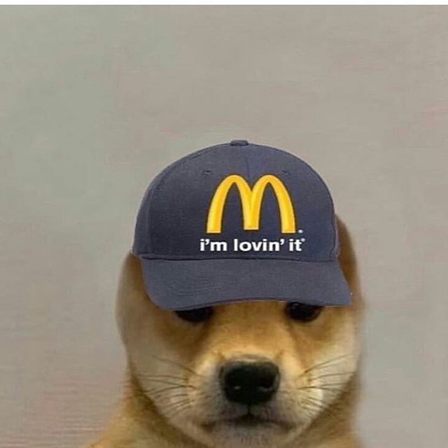 Pin By Disabled Children On Stolen Memes In 2020 Doggy Baseball Hats Dogs