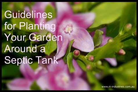 guidelines for planting your garden around a septic tank ri industries