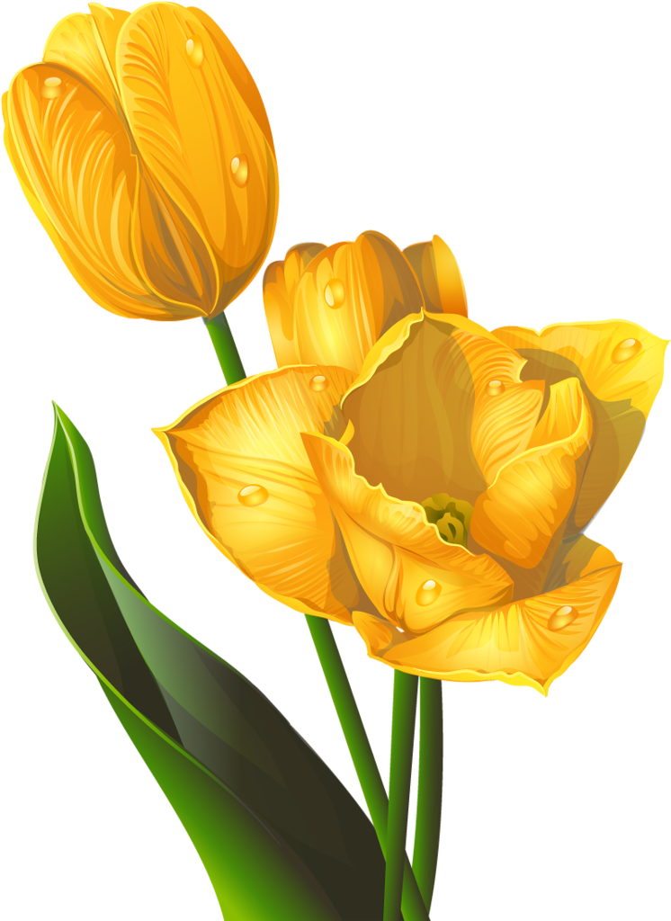 Kartinki Po Zaprosu سكرابز ورد توليب اصفر The Journey Of Flower Tulips Art Flower Art Painting