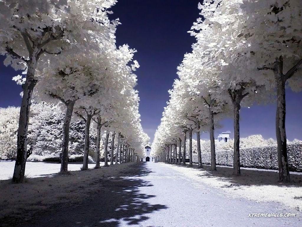 images of seasons | Winter Season 1024x768 wallpaper ...