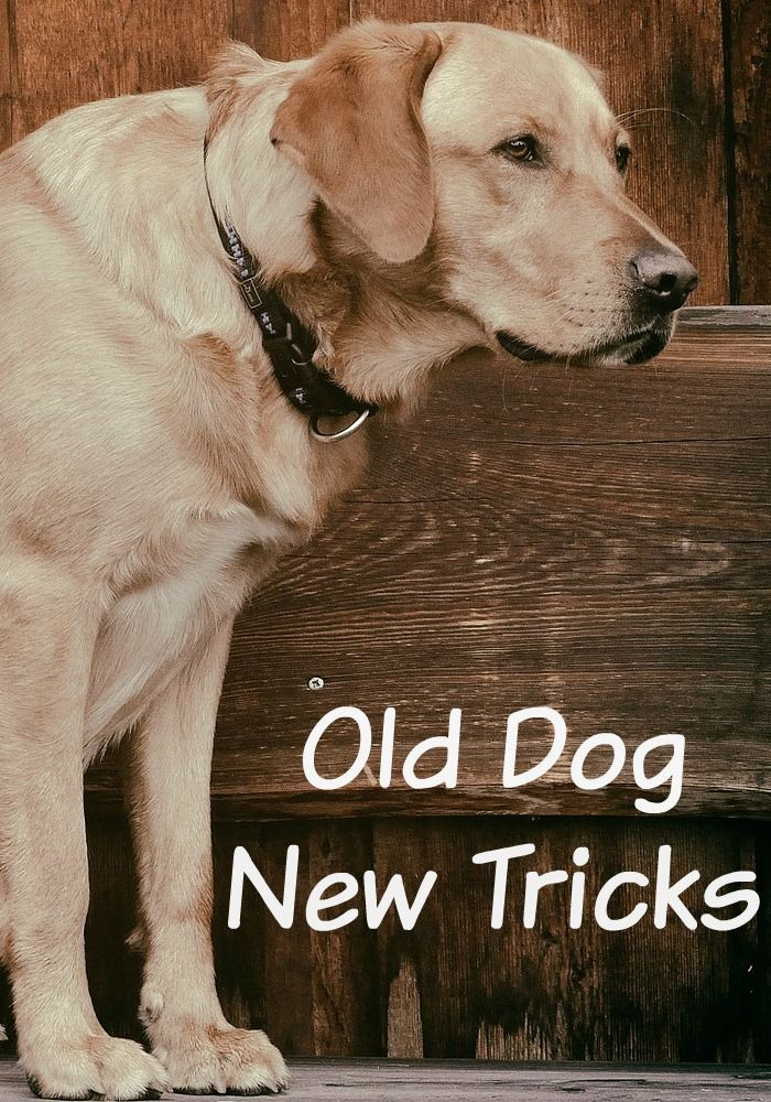 Old Dog New Tricks Caring For Family Pets Dogs Old Dogs Dog