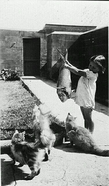 """""""Kedi Beslemece,1936..."""""""