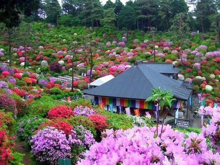 Japanese Garden Desktop Nexus Wallpapers Japanese Garden Azaleas Garden Azalea Festival