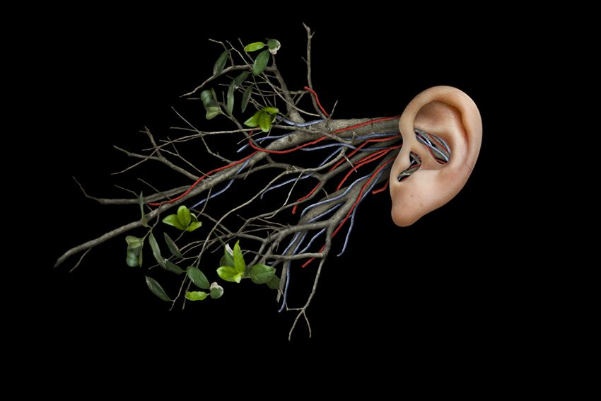 new, natural conception of anatomy | Arts and Pictures | Pinterest ...
