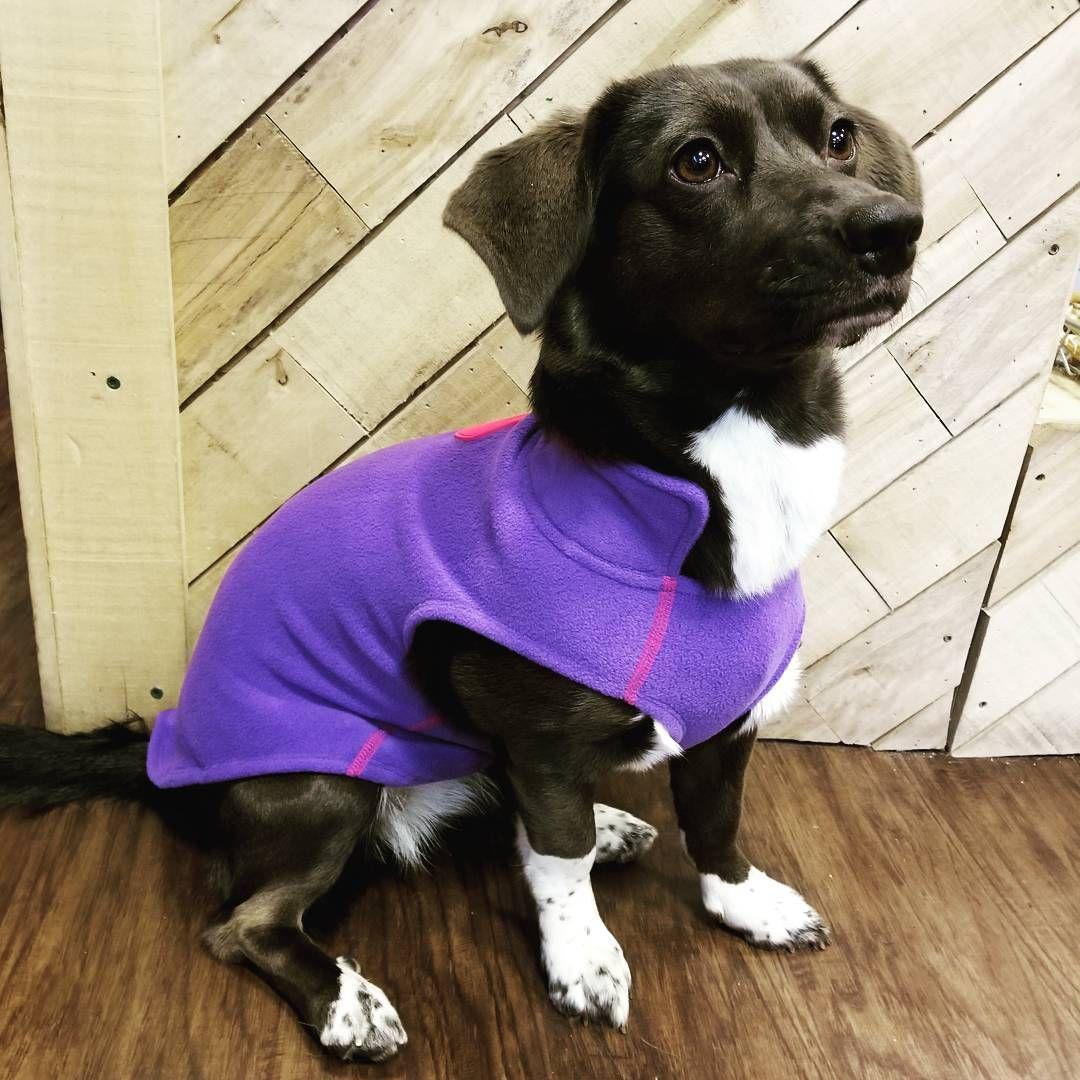 Rc Pet Products West Coast Rain Wear Dog Coat Size 24 Red Buffalo Plaid Dog Winter Coat Dog Coats Dog Sweaters