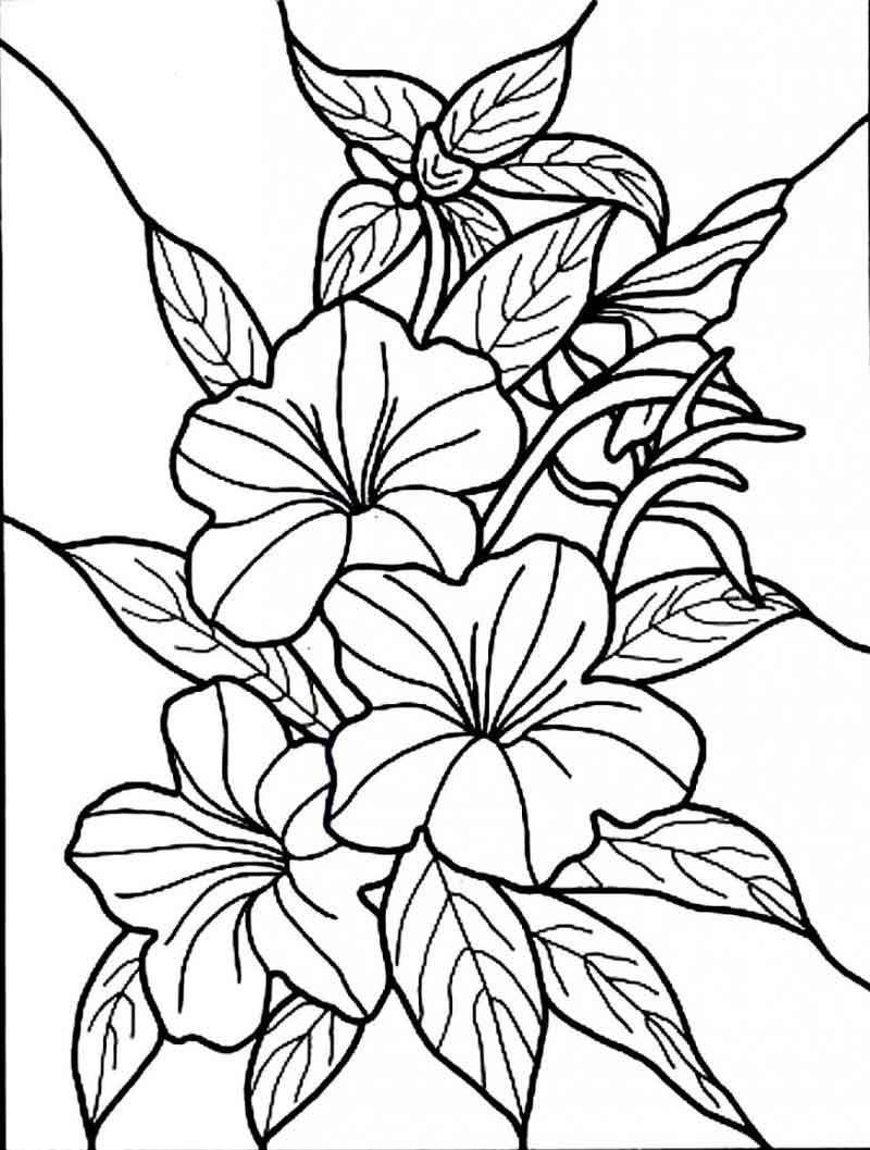 Flower Printable Coloring Pages Cinebrique