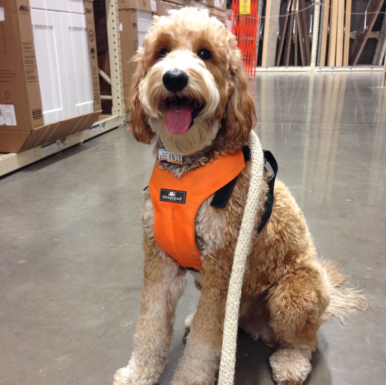 Best Dog Harness For Car Safety It S The Sleepypod Brand Dog