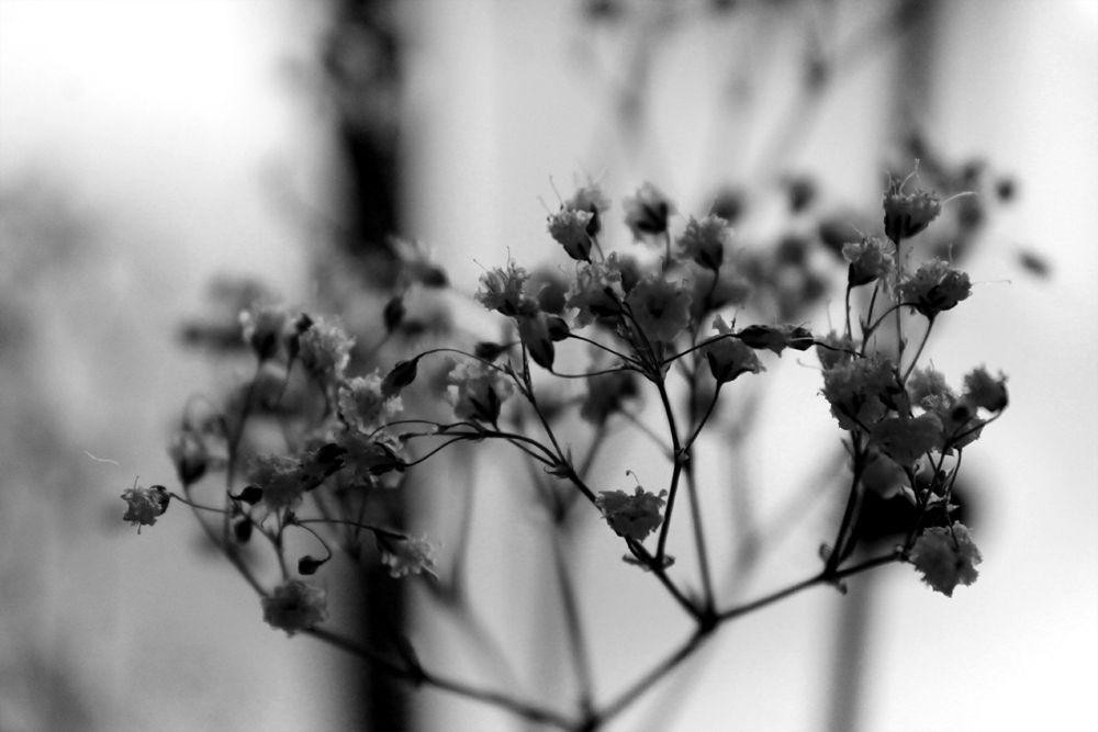 L'Ombre des Nuages_hiver3