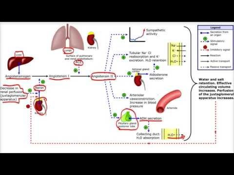 Renina angiotensina antagonista de la aldosterona hipertensión