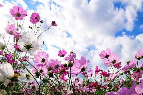 11 Primavera fotos paisajes