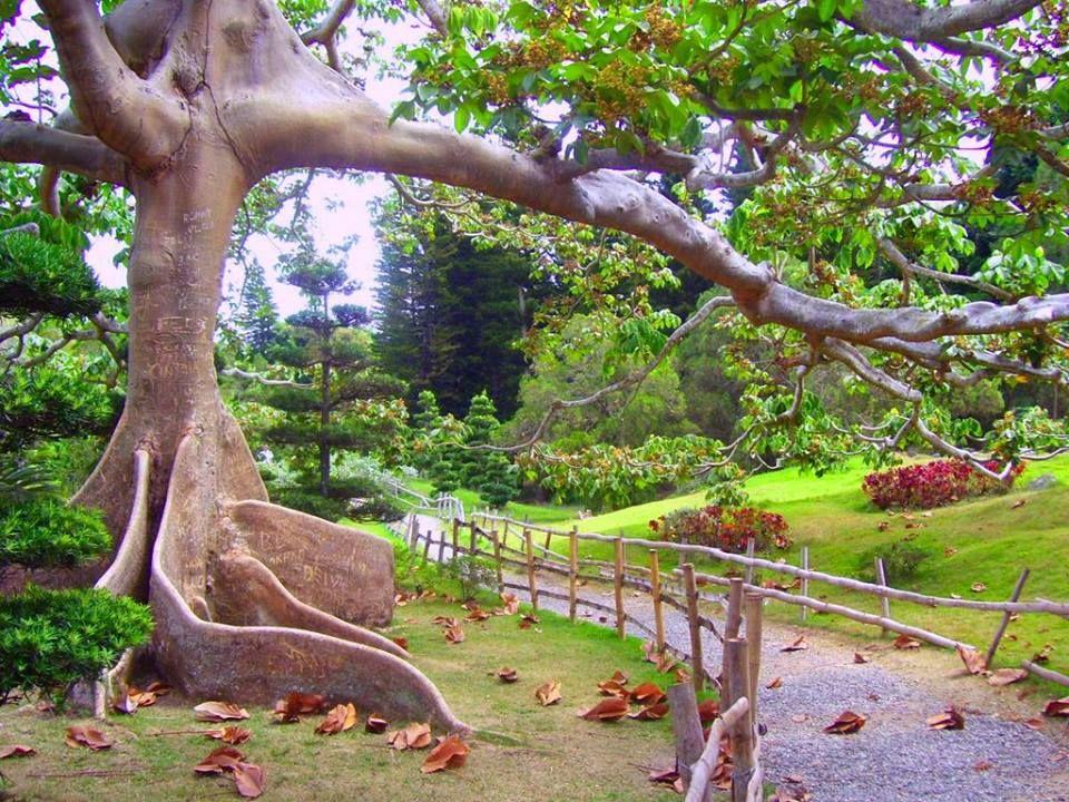 Jard n japon s en el jard n bot nico nacional de santo for Jardin botanico nacional