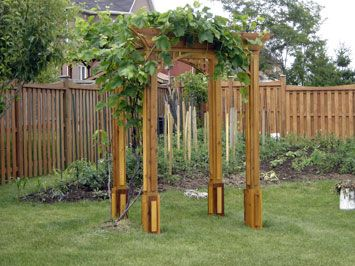 Garden ideas  Grape Arbor ...