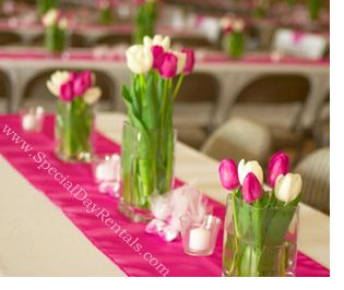 Wedding Chair Covers Rentals Seattle How To Cover A Cushion Watermelon And Champagne Colors Day S Most Affordable