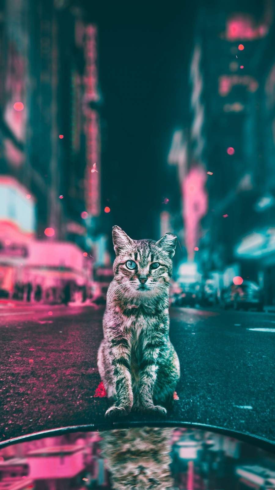 Cat In The City Iphone Wallpaper Fond D Ecran Chat Animaux