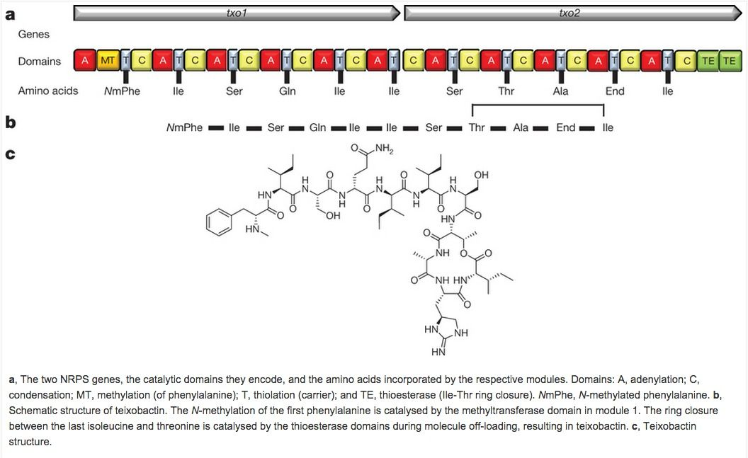 A new antibiotic kills pathogens without detectable resistance