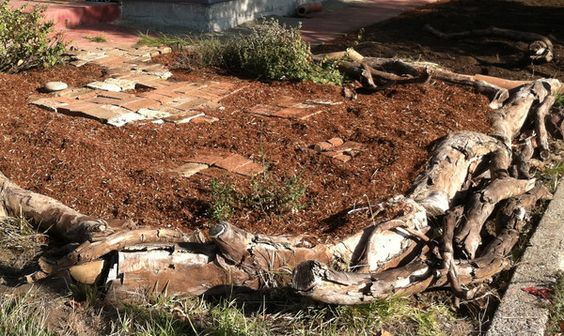 How to build raised garden beds if you're cheap and lazy