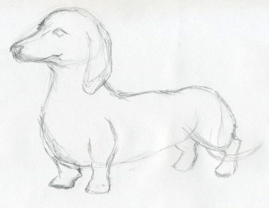 A wiener dog by i like socks2