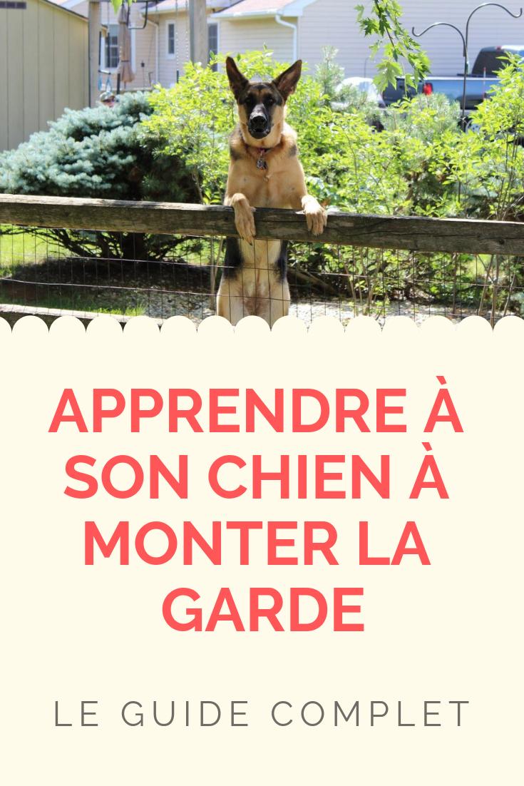 apprendre à son chien à monter la garde