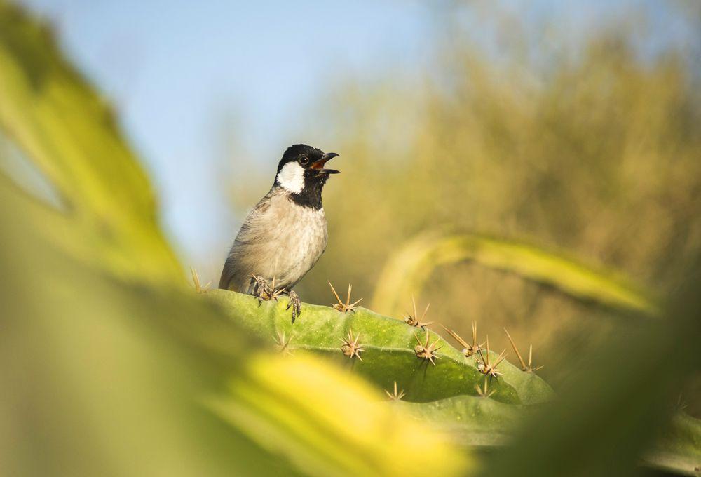 صوت البلبل اجمل انغام الطبيعة قائمة منوعة لتغريده طيور العرب Outdoor Decor Outdoor Bird Feeders