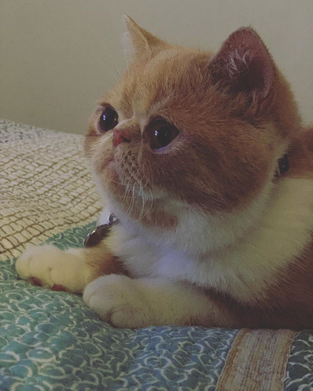 Pin On Feline