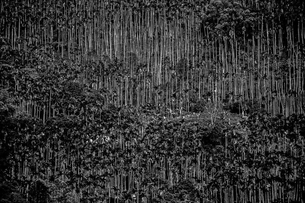 LensCulture - Fotografía contemporánea