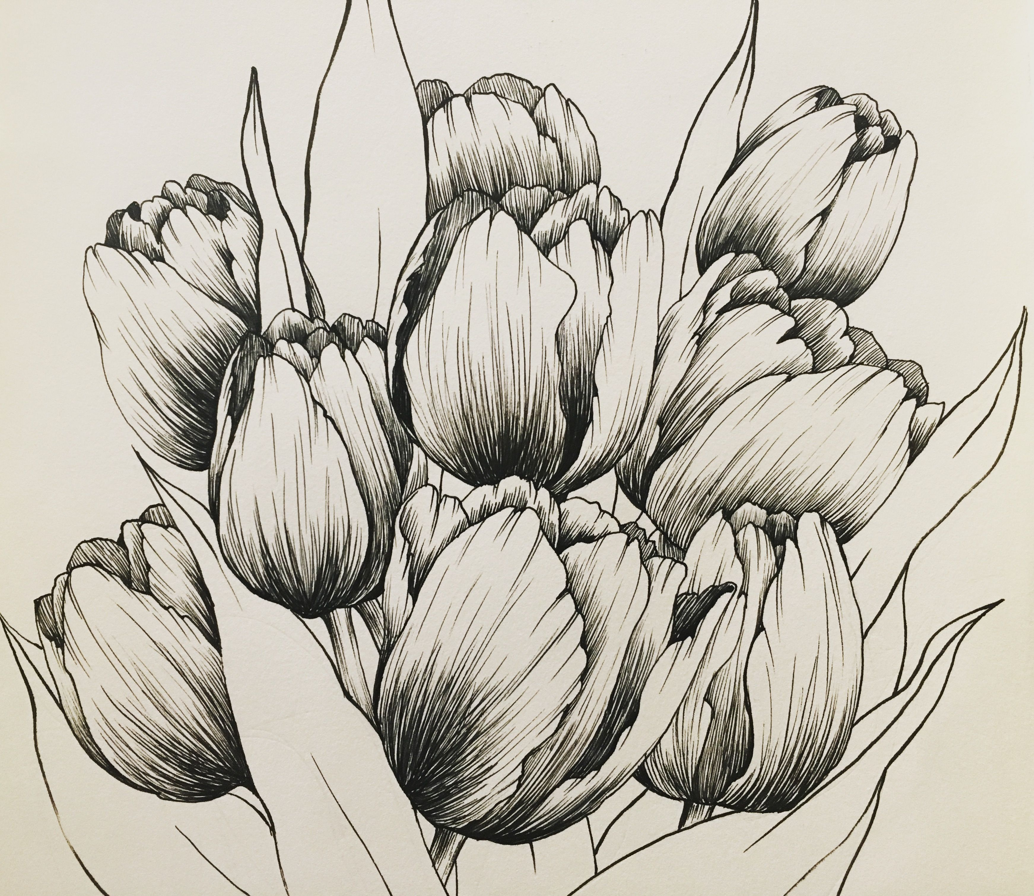 Hand Drawing By Hanna Chung A Bunch Of Tulips Tulip Drawing How To Draw Hands Tulips Art