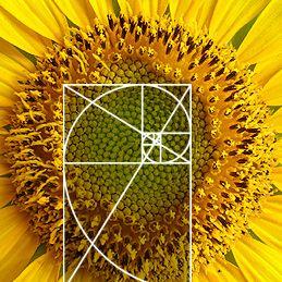 sunflower architecture | Proporção áurea, Números de fibonacci ...