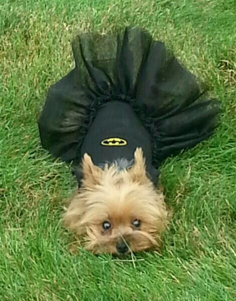 The Best Thing Ever Snail Mail Pet Costumes Yorkie Dog Costumes