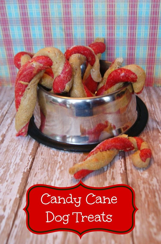 Homemade Candy Cane Dog Treats.  Snow day activity With the kids. For shilo for Christmas.