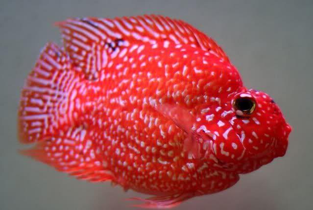 Pin Di Fishes