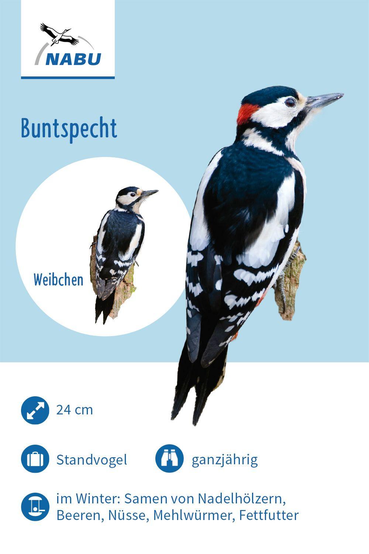 Der Buntspecht Buntspecht Specht Vogel Im Garten