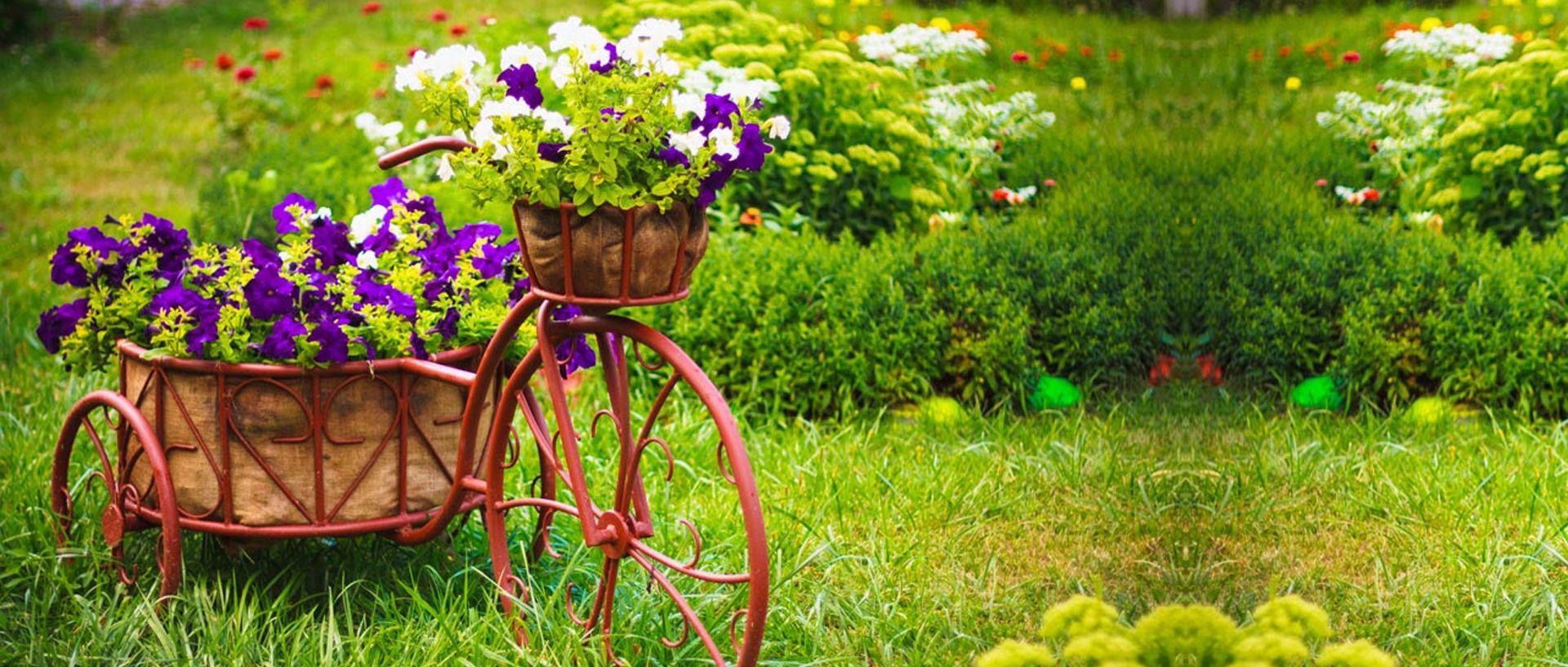 حديقة نبات زهرة ربيع الخلفية Beautiful Flowers Garden Flower Garden Flower Garden Ideas Landscaping